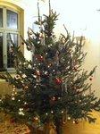 Weihnachtsbaum bei Vitebergia