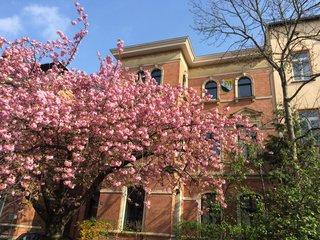 Kirschbaumblüte vorm Verbindungshaus